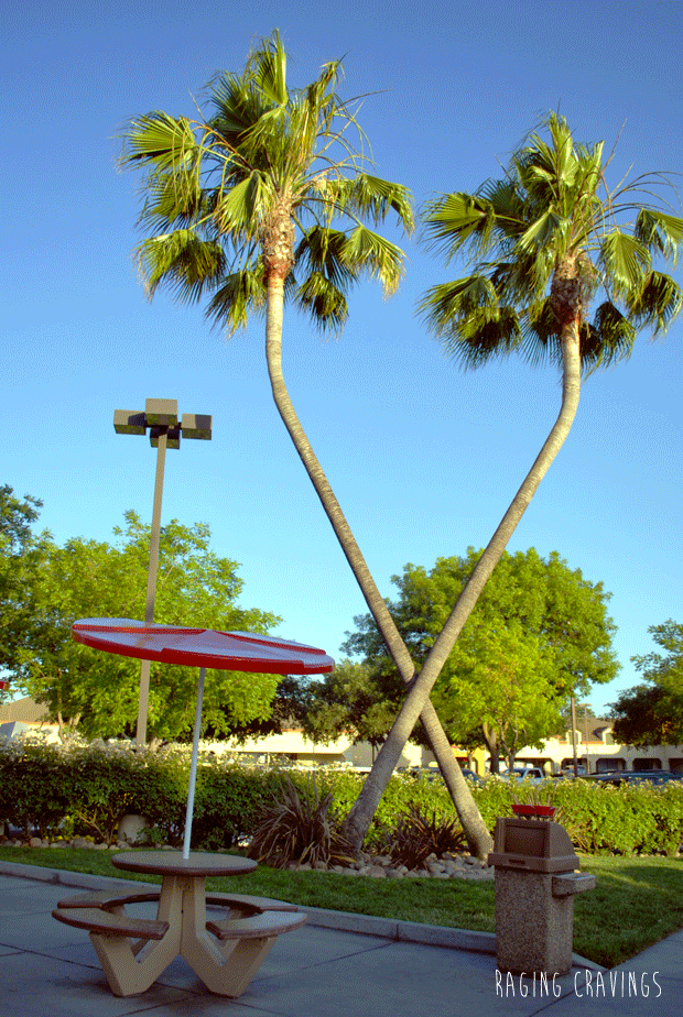 Palm trees at In-N-Out